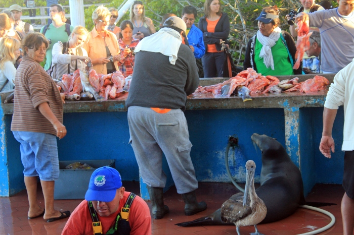 Humans and animals alike come to find some good eats at an Ecuadorian fish market.